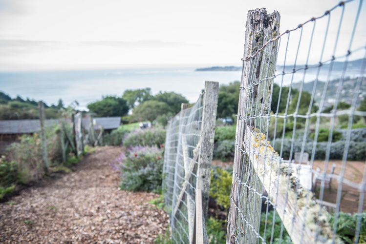 old fence & view